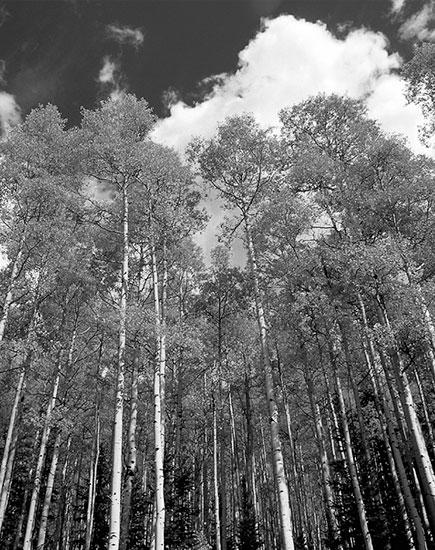 Investir dans le bois
